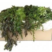 zuurstof planten pakket