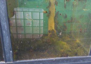 poelslakken tegen draadalg na 1 dag