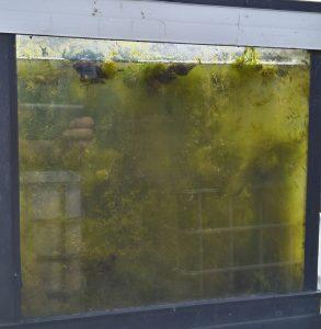 poelslakken tegen draadalg voor